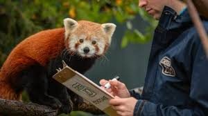 Chester Zoo recommended